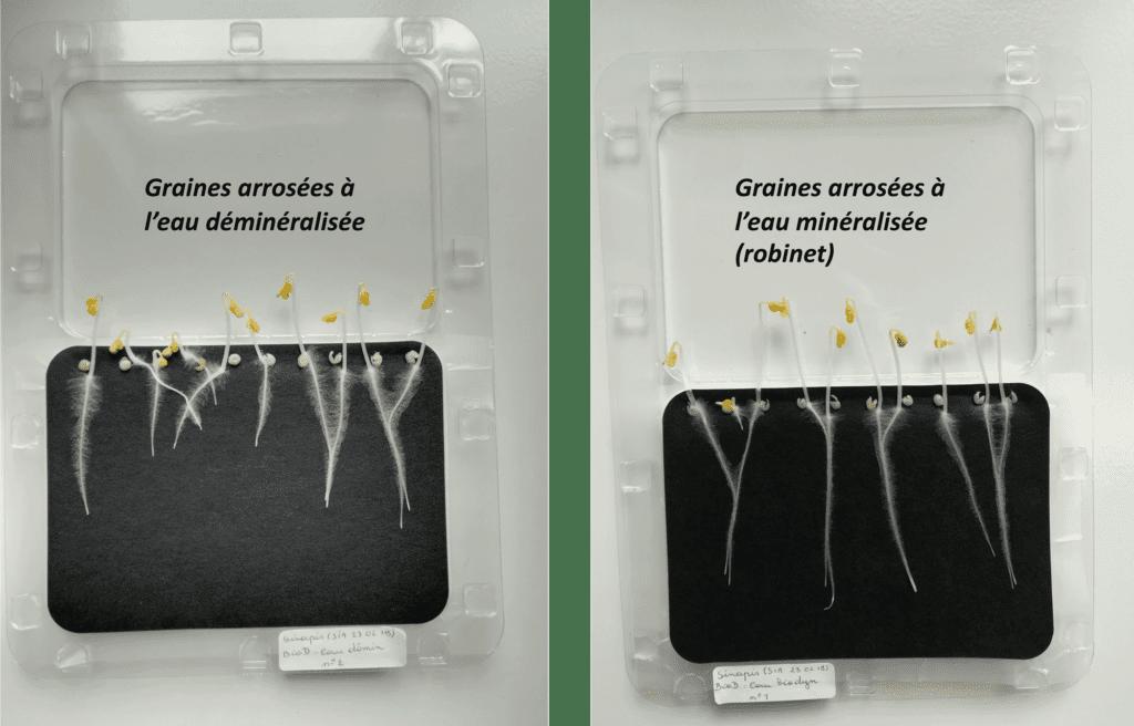 Osmose inverse comparatif graines germées