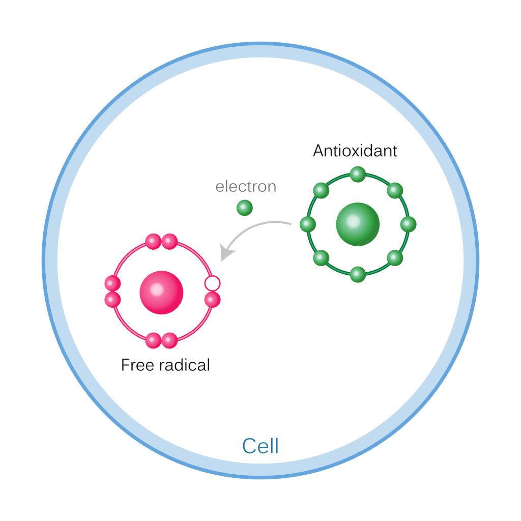How Antioxidants Work On Free Radicals